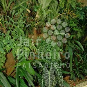 Jardim Tropical por Jair Pinheiro